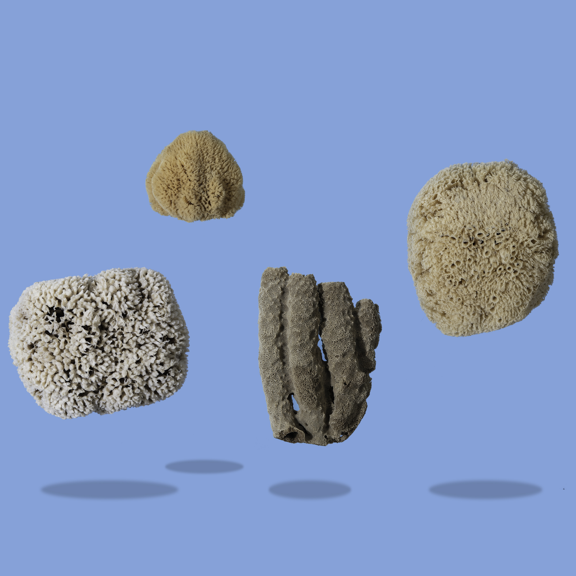 Seep the benefits of Sea Sponges